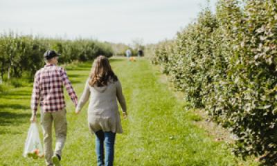 Apple picking in Saugatuck