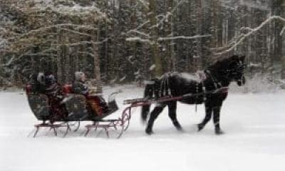Sleigh Ride through the woods
