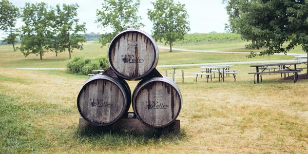 Fenn Valleys Vineyards